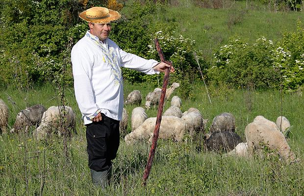 У Михайлівці відроджується вівчарство