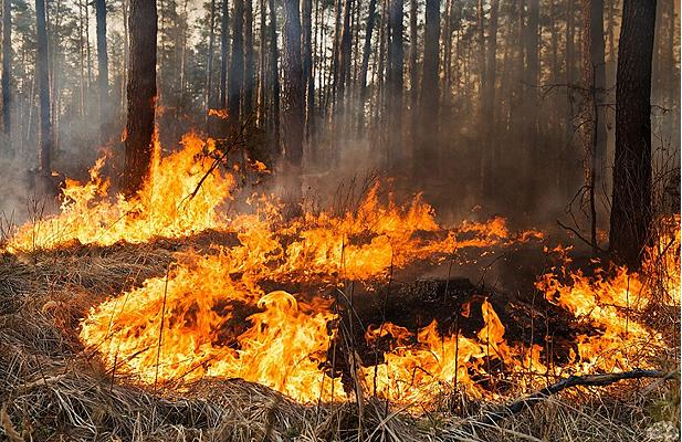 Підпал лісу у селі Кам'янка надав значних збитків