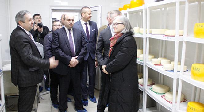 Сир європейського зразка почали виробляти у Михайлівці