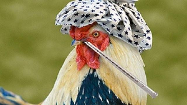 До уваги Буковинців! Зареєстровані випадки захворювання на висопатогенний грип птиці