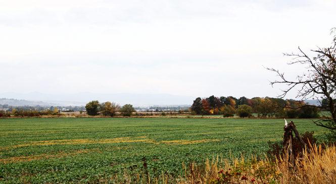 Верховна Рада ухвалила закон про ринок землі