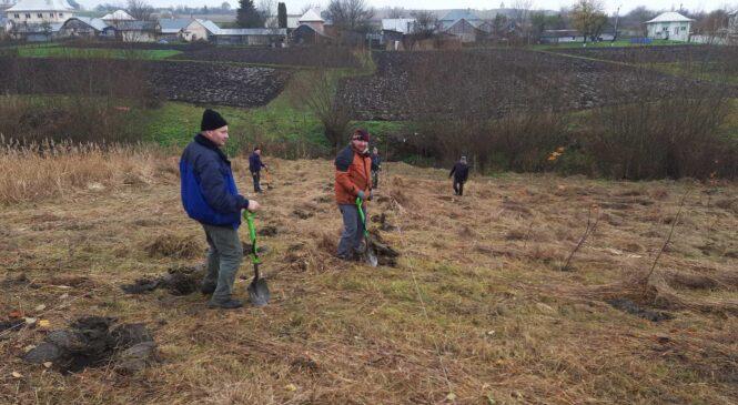 У селі Грушівка висадили понад 600  дерев різних порід
