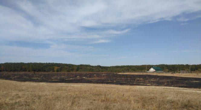 Необережне поводження з вогнем привело до загоряння молодого горіхового саду