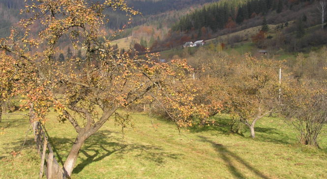 Бережіть опале листя