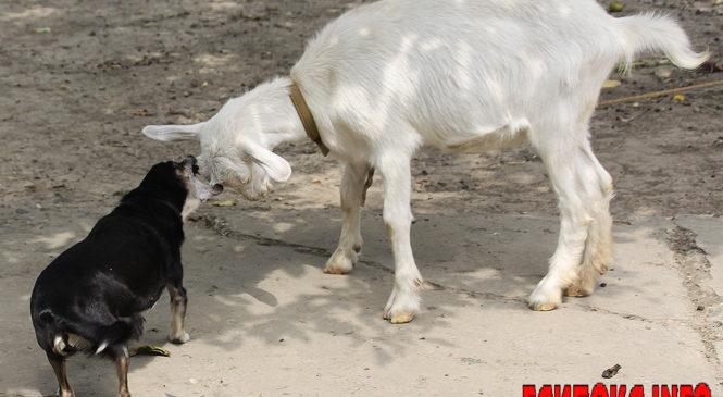 Які хвороби переносять домашні тварини