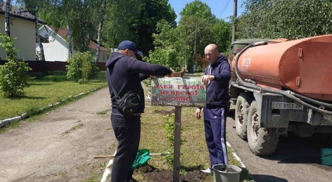 """Волонтери ГФ """"Козацька варта"""" разом з учнями Глибоцької гімназії  посадили більше 50 саджанців декоративних дерев"""