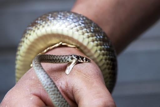 З початку року від укусів змій постраждали понад два десятки людей